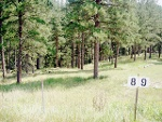 Photo Lot 8 Placer Place Ct. Hill city, sd 57745: $79000